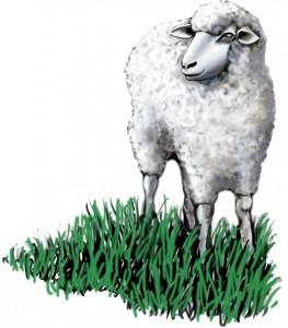 lamb_12086c